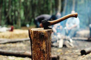 topor copaci padure